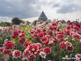 Keukenhof in summer Activiteiten Bollenstreek Verita's Visit