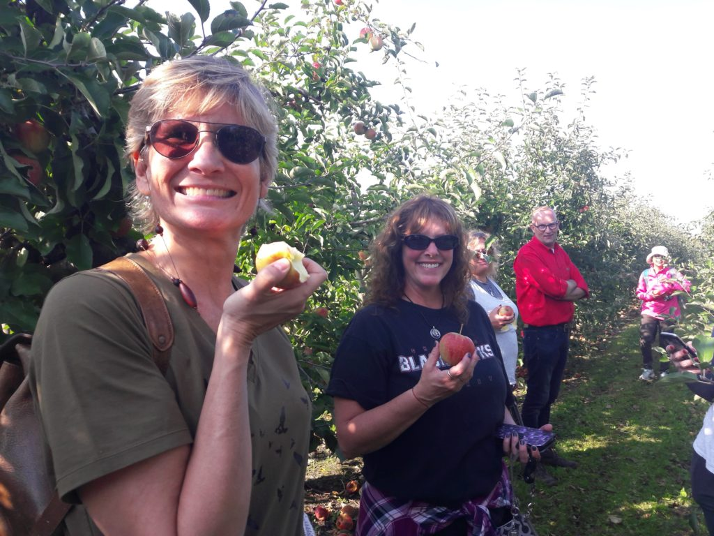 apple picking group tour Dutch cheese and apples