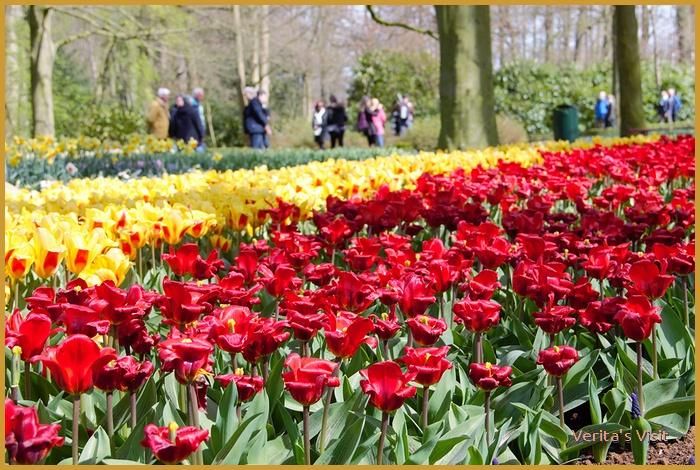 Amazing tulips Keukenhof-veritasvisit