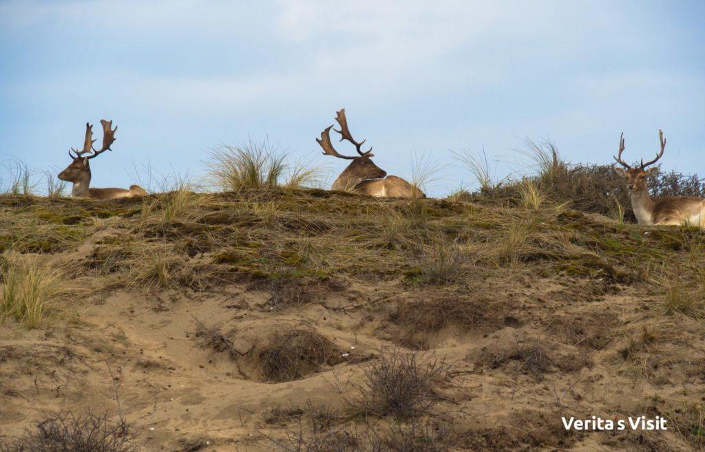 wildlife Amsterdam cycling route North Sea wildroute fietstocht gids teambuilding Verita's Visit