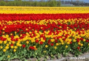 Tulip tour Verita's Visit