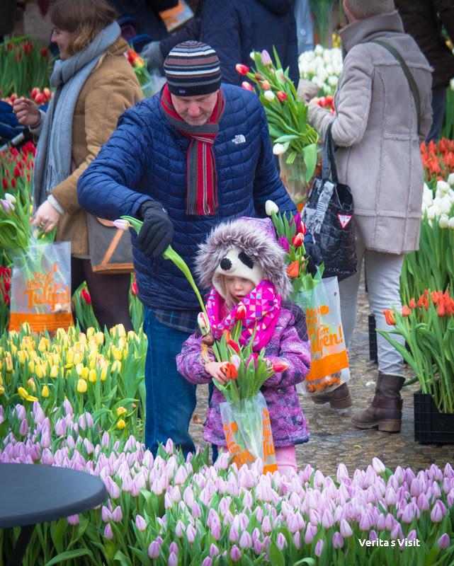 tulip garden Amsterdam  Verita's Visit