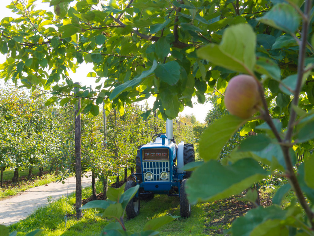 Fruit pluk dag Verita's Visit picking