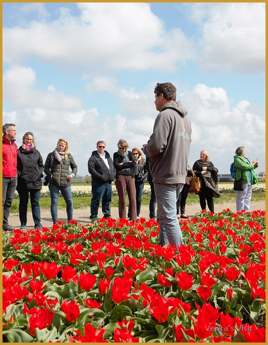 Guided tour tulip farm-Netherlands veritasvisit