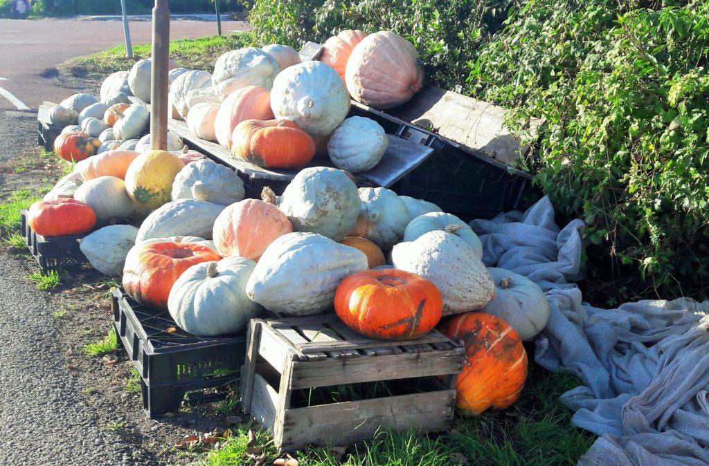 Halloween in Holland Verita's Visit activities