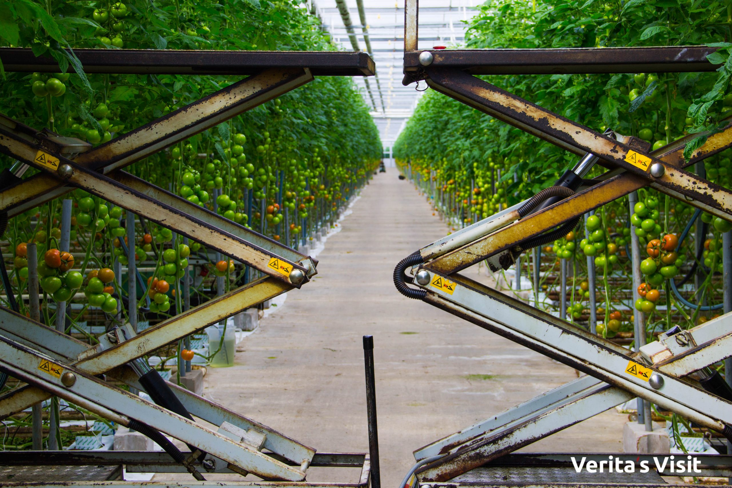 private guided tour greenhouse Holland festival Verita's Visit