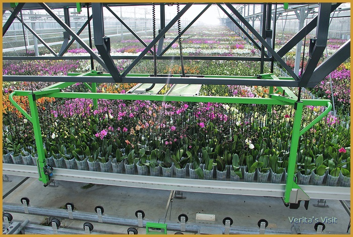 A view into a orchid greenhouse