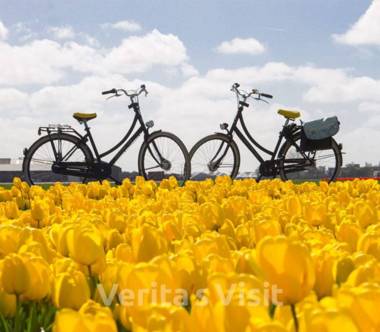 Bike tour tulip fields & bulb farm
