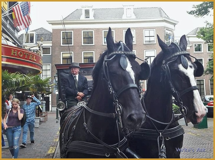 The Hague horse drawn carriage ride tour Verita's Visit