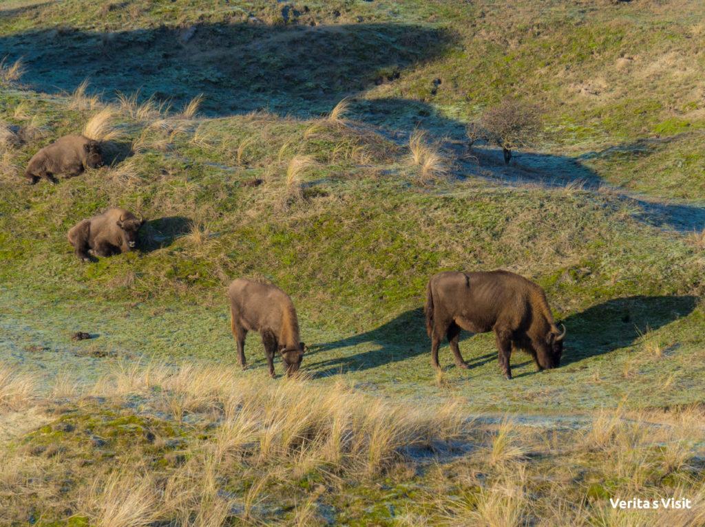 Wildlife tour Verita's Visit Holland