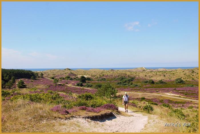 Walking trail through dunes & heather fields