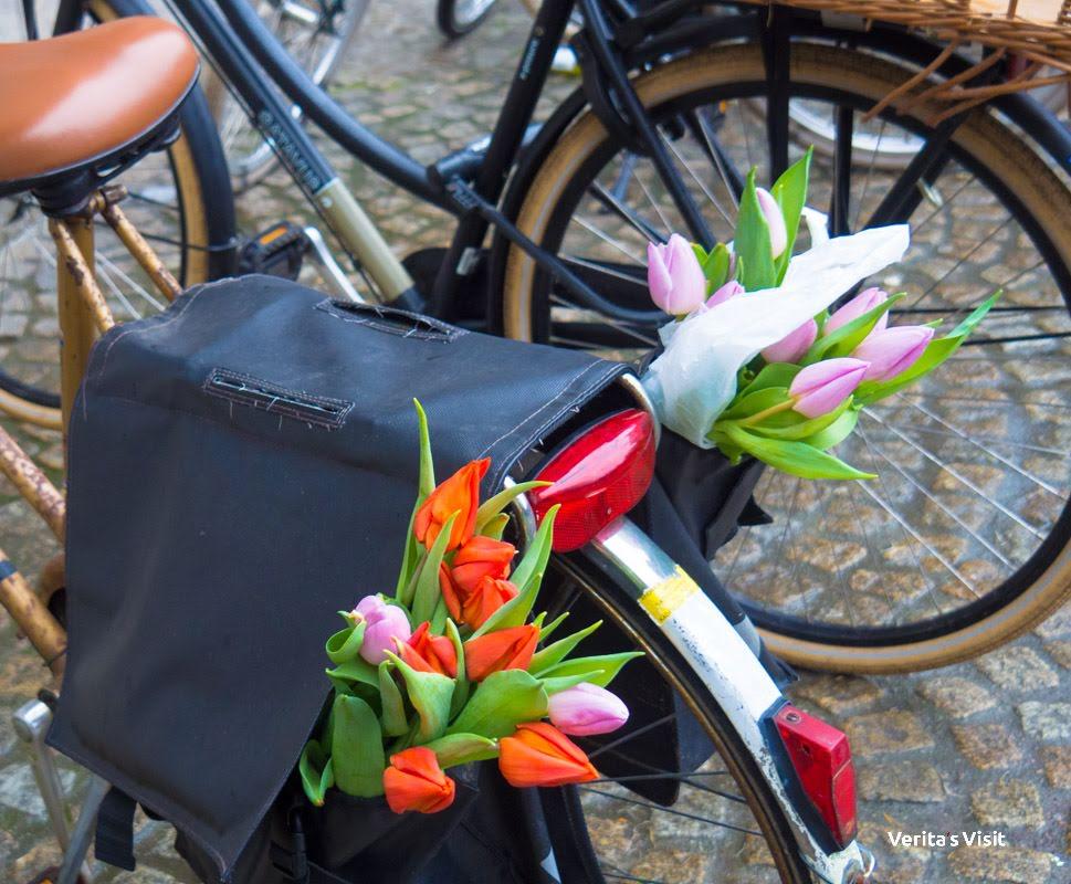 bike Amsterdam tulips  Verita's Visit