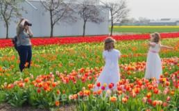 Where to shoot tulip dance movie Keukenhof Amsterdam Verita's Visit Holland